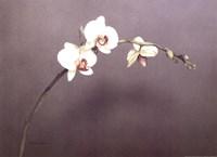 Orchid I Fine Art Print