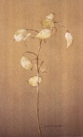 Lunaria Study II Fine Art Print