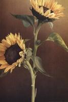 Isabell's Garden I Fine Art Print