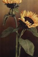 Isabell's Garden II Fine Art Print
