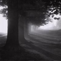 Misty Trees Framed Print