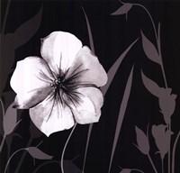 Ebony and Ivory I Fine Art Print