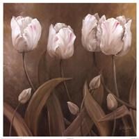 Sepia Tulips II Fine Art Print