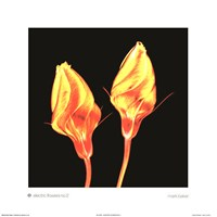 Electric Flowers No. 2 Fine Art Print