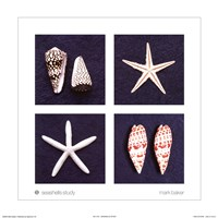 Seashells Study Fine Art Print