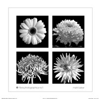 Flora Photographica No. 1 Fine Art Print