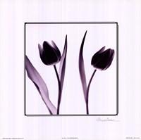 Tulip Impressions IV Fine Art Print