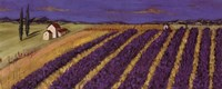 Rows of Lavender Fine Art Print