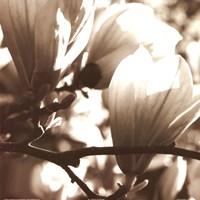 Blossom I Framed Print