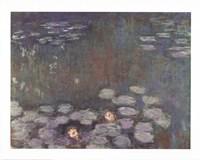 Water Lilies Fine Art Print