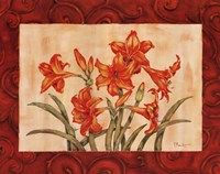 Linen Scroll Amaryllis Framed Print