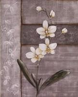 Orchid Shimmer I - Mini Framed Print