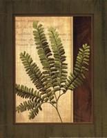 Fern Grotto II Fine Art Print