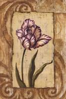Classic Tulip I Fine Art Print