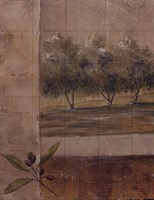 Olive Groves I Fine Art Print
