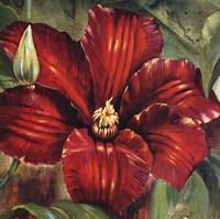 Rosa Odorada Fine Art Print