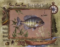 Blue-Gilled Sunfish Fine Art Print