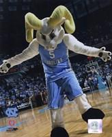 University of North Carolina - Ramses the Tar Heels Mascot, 2007 Fine Art Print