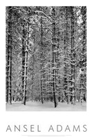 Pine Forest in Snow (embossed) Framed Print