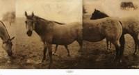 Extension of a Horse Fine Art Print