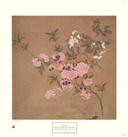 Cherry Blossoms and Wild Roses Fine Art Print