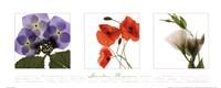 Garden Flowers I Framed Print