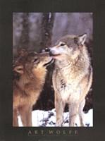 Boreal Interlude, Canada Fine Art Print