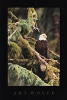 Silent Sentinel, Alaska Fine Art Print