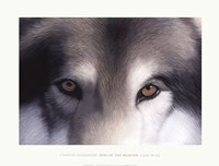 Eyes of the Hunter: Gray Wolf Fine Art Print