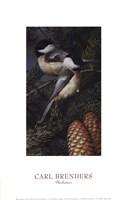 Chickadees Fine Art Print