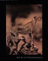 African Cheetah Fine Art Print