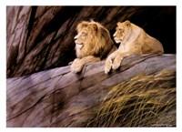 Lions Fine Art Print