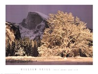 Half Dome and Elm Fine Art Print