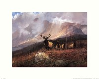 Bookcliffs Elk I I Framed Print