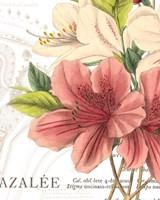 Azalee Jardin I Fine Art Print