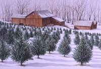 Xmas Tree Farm Fine Art Print