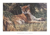 Last Sanctuary- Florida Panther (detail) Framed Print