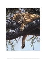Lake Manyara Lioness Fine Art Print