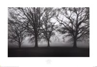 Fog Tree Study IV Framed Print