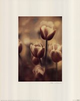 Tinted Tulips III Framed Print