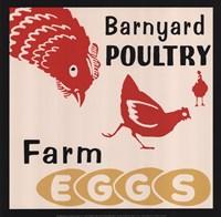 Barnyard Poultry-Farm Eggs Framed Print