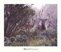 Lone Star Whitetail Fine Art Print