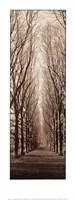 Poplar Trees Fine Art Print