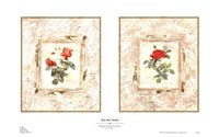 Rose Bud Medley Fine Art Print