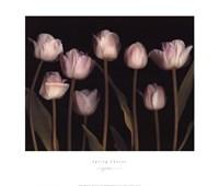 Spring Chorus Fine Art Print