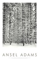 Pine Forest In The Snow, Yosemite Nation Framed Print
