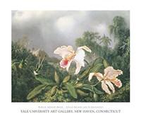 Jungle Orchids and Hummingbirds Fine Art Print