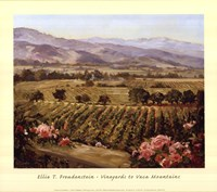 Vineyards to Vaca Mountains Fine Art Print