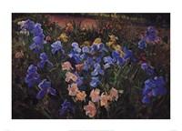 Iris Bed Fine Art Print