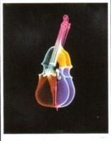 Bass Fine Art Print